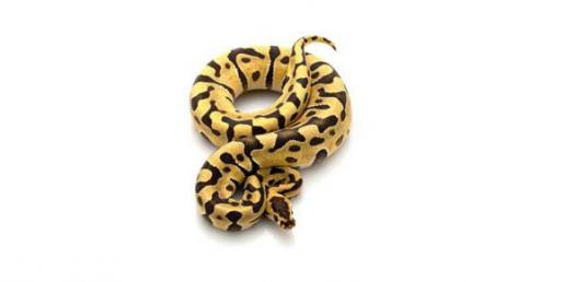 Ball Python Care – Top 10 Questions and Answers