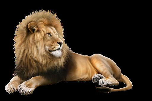 Information Regarding the African Lion