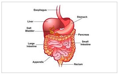 Coding for Lower Gastrointestinal Endoscopic Procedures