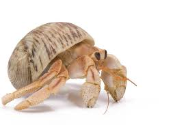 Hermit Crab Care – Things You Should Know